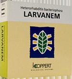 Larvanem