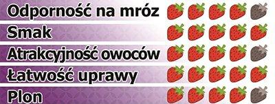 arosa - odmiana truskawki