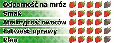 Polka - szkółka sadzonek truskawek