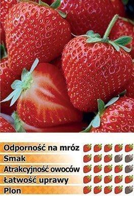 truskawki honeoye frigo