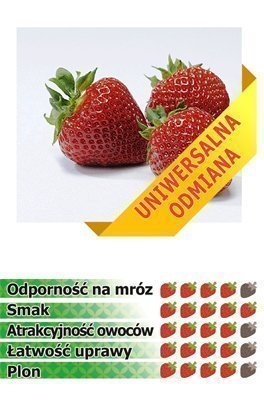 Truskawki Polka